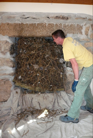 Bird's nests in your chimney can be a fire hazard!